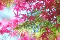 Картинка розовые, ветки, листья