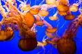 Картинка медузы, мир, подводный
