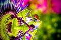 Картинка божья коровка, цветок, пассифлора