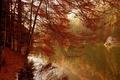 Картинка озеро, осень, деревья