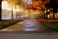 Картинка свет, деревья, город, боке, листва, алея, аллея, осень