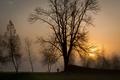 Картинка собака, туман, прогулка, деревья, человек, солнце, Вечер, силуэты, закат