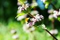 Картинка зелень, пчёлка, солнце, лето