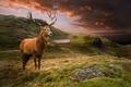 Картинка Олени, Животные, Пейзаж, Трава, Облака