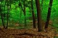 Картинка деревья, заросли, ствол, лес, листья