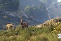 Картинка GTA, Природа, олени