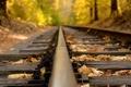 Картинка макро, природа, дорога, коричневые, листья, осень, желтые, рельсы, лес