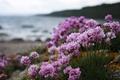 Картинка цветы, макро, Розовые, растения, природа, берег