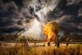 Картинка Stella artois, gods, поле, деревня, молния, замок