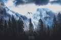 Картинка игра, Небо, Лес, скачать обои, Обои, the elder scrolls v skyrim, ART GAME, forest, Art ...