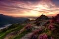 Картинка зарево, небо, цветы, камни, трава, возвышенность, горы, река, Шотландия, Trossachs National Park