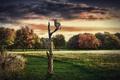Картинка деревья, сова, коллаж, птица, сухое