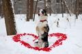 Картинка собака, взгляд, сердечка, пёс, друг, зима, помада, лепестки