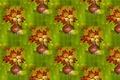 Картинка текстура, фон, букет, кувшин, осень, листья