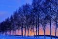 Картинка небо, снег, зима, дорога, деревья, закат