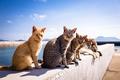 Картинка лето, фон, коты, Котяры