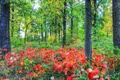 Картинка трава, деревья, кусты, осень, лес, листья