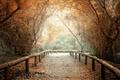 Картинка листья, деревья, природа, фон, дерево, widescreen, обои, wallpaper, тропинка, широкоформатные, background, полноэкранные, HD wallpapers, широкоэкранные, ...