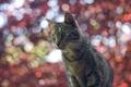 Картинка кошка, кот, блики, фон, боке