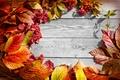 Картинка веточки калины, осень, листья
