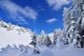 Картинка ель, снег, горы, зима, небо, деревья, облака