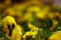 Картинка макро, Цветы, желтый