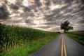 Картинка дерево, поля, тучи, плантации, пасмурно, дорога, шоссе