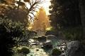 Картинка лес, деревья, закат, природа, река, ручей, камни, арт, речка