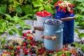 Картинка Collection of wild berries, ягоды, лето, еда