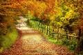 Картинка тропинка, забор, Осень, деревья, лес, листья