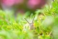Картинка трава, улитка, природа