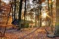 Картинка осень, лес, домик