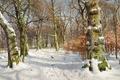 Картинка картина, парк, вороны, снег, свет, зима, деревья, мох, птицы, Peder Mork Monsted, кора, роща, пейзаж, ...