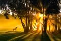 Картинка лето, свет, деревья, пейзаж, утро