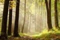 Картинка трава, деревья, лучи, хворост, лес