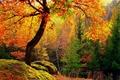 Картинка лес, желтые, деревья, осень, мох, листья