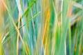 Картинка разноцветная, трава, зелень, осень