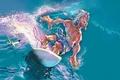 Картинка 157, серфинг, волна, рисунок