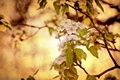 Картинка стиль, дерево, фон, природа
