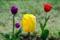 Картинка макро, лепестки, сад, клумба, стебель, тюльпаны