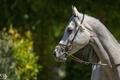 Картинка конь, свет, серый, морда, профиль, солнце, лошадь, (с) OliverSeitz