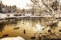 Картинка twilight, trees, sunset, winter, lake, rocks, snow, dusk, reflection, freeze, branches, ducks, mirror, ripples, frost