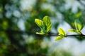 Картинка макро, ветка, фон, молодая, листва, красивая, сочная, блики, зеленая, весна
