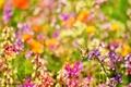 Картинка цветы, природа, размытость, боке, ярко, бабочка, насекомое, лето