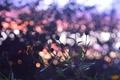 Картинка осень, небо, цвета, закат, настроение, Цветы, by mike pro