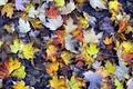 Картинка осень, земля, листва, желтые, Листья, текстуры, кленовые