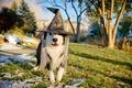 Картинка собака, праздник, шляпа