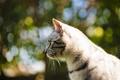 Картинка кошка, усы, wallpapers, фон, яркие, обои, размытость, цвета, боке, фото, шерсть, глаза, кот