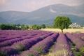 Картинка поля, природа, Provence, небо, Франция, лаванда, пейзаж