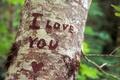 Картинка Признание, дерево, чувства